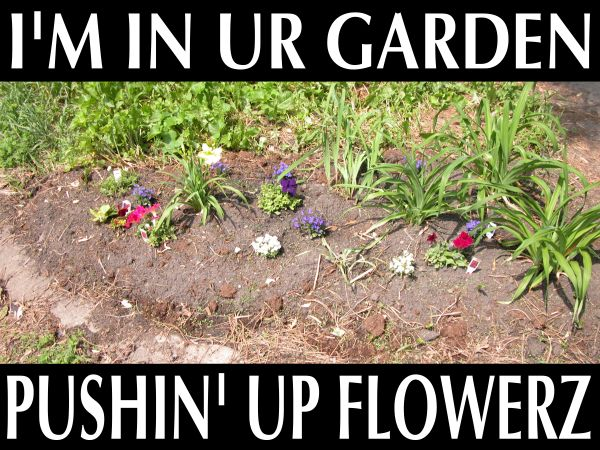 flowerz.jpg
